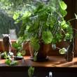 Zimowa pielęgnacja domowego ogródka