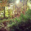 Jesień – ostatni moment na ocieplenie domu, jeszcze w tym roku!
